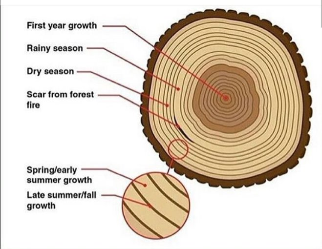 How the seasons affect wood growth